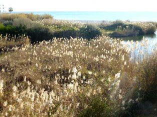 Riu Algar Rutas en Altea